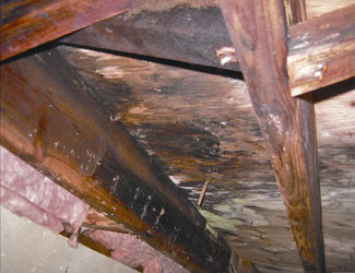 mold and rot in a Cut Bank crawl space