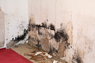 mold damage remediation and removal in Montana
