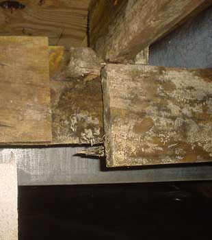 Extensive basement rot found in Shelby by Hi-Line Flood Solutions