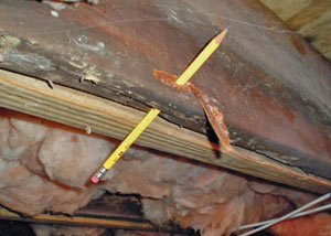 Destroyed crawl space structural wood in Oilmont