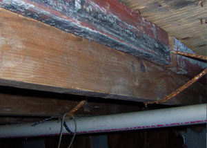 Rotting, decaying wood from mold damage in Havre